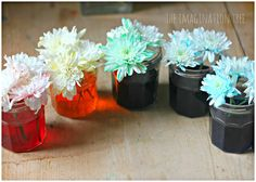 Exploring how water moves through a plant with an exciting dyed flowers science experiment for kids!