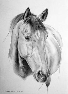 Horse Art, Equestrian, Horses, Drawings, Donkeys, Landscapes, Paintings, Horse, Dibujo