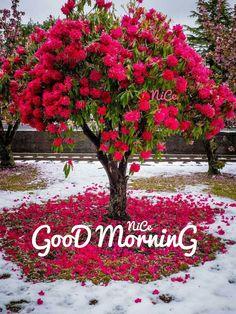 Good morning new image Good Morning Flowers Quotes, Good Morning Sunday Images, Good Morning Beautiful Flowers, Good Morning Tuesday, Good Morning Roses, Good Morning Beautiful Quotes, Good Morning World, Good Morning Picture, Good Morning Greetings