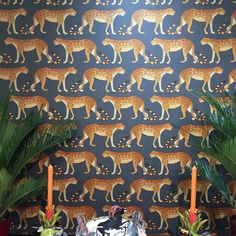Ardmore, Cole & Son, Leopard Walk Wallpaper