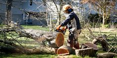 Difference Between Tree Trimming And Tree Removal #treecutting #treeservice #treeremoval