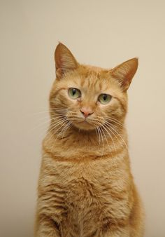 Lisa has two orange Tabby cats named Henry and Wesley.