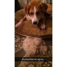 Suh furry  #dog #rescuedog #mutt #huskymix #huskyeyes #blueeyes #colliemix #puppy #perro #adoptdontshop #furry #dogsofinstaworld #lacyandpaws #dogsofinstagram #puppiesofinstagram #puppiesofig #on #husky #bordercollienation #bordercollie #california #cadog #dogmodel #puppylove #spayandneuter #furry #fuzzy #shedding #fur by coralthecanine