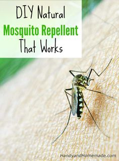 DIY Natural Mosquito Repellent Recipe That Works Herbs and essential oils that repel mosquitoes include basil, eucalyptus, peppermint, rosemary, lemon balm, citronella, onions and garlic extract. You can make your own natural mosquito repellent with essential oils: 5 drops each of 2 different essential oils 2 tablespoons vegetable oil or coconut oil