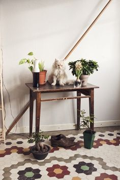 white fluffy kitten, plant table, hexagon tiles (fox on the run)