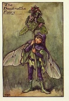 Alphonse's Room: Cicely Mary Barker : Spring fairies part 1