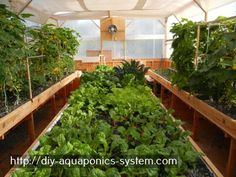 aquaponics systems for sale - indoor hydroponic systems diy.build your own aquaponics system 7900393848