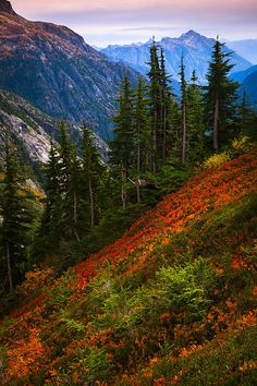 Cascade Pass, Cascade Range, Washington; photo by Inge Johnsson