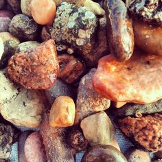 Natural Amber from the beach near Saulkrasti, Latvia