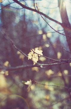 ≡ falling leaves