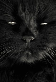 Intimate Portraits Of Stray Cats That I Took In My Hometown - This photographer is celebrating stray cats through majestic portrait photographs
