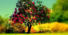 Algumas das mais belas e incríveis árvores do mundo   Curto e Curioso