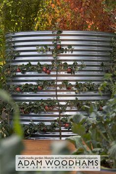 Cool way to espalier an apple tree & hide your rainwater tank