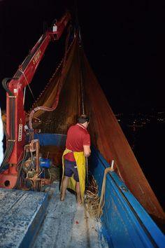La rete viene calata in mare per circondare le alici al largo di Cetara