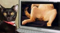 Funny Animal Videos, Funny Animals, Cat Gif, Funny Cats, Cute, Kawaii, Funny Animal, Funny Kitties, Hilarious Animals