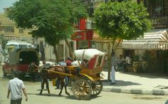 Bedouin horse cart passes in front of KFC - Cairo, Egypt.  The pyramids and the sphinx were great, but I what I really loved best was just riding around checking out the city!