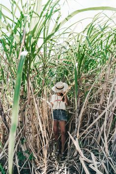 Jamica-Sugar_Cane_Field-Levis-Straw_Hat-Reebok_Tee-Outfit-Summer-Collage_on_The_Road-Bamboo_Walls-20