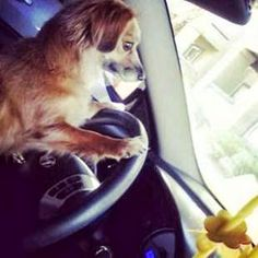 How many of you Hyundai lovers are taking your furry friends with you on a road trip this weekend?