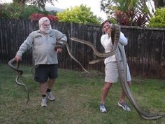 Queensland family who thought the thumping noise they heard was their ceiling collapsing is horrified to learn it was two massive SNAKES brawling in the roof space Snake Removal, Removal Services, Feral Cats, Cairns, Scrubs, How To Remove, Snakes, Outdoor, Catcher