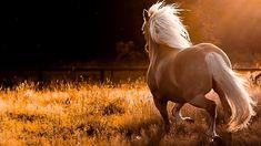 Beautiful Wild Horses Wallpaper