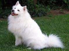 Look at this dog it has a white coat