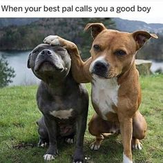 Dog Memes That Will Cure Your Bad Day - 11