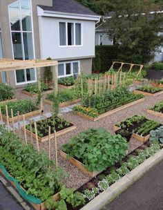 Maybe not the front yard but I'm loving the symmetry of this.  I wonder if the gravel bed would really keep weeds down?    Front Yard Vegetable Garden Seattle   Pallet Potting Bench PEACH TOMATO AND MOZZARELLA CROSTINI