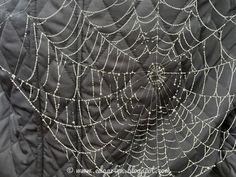 Edgarten - Gartenblog: 🍂 Herbst auf Balkonia