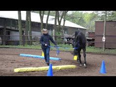 Horse Exercises, Horse Training, Work Inspiration, Trainer, Horse Stuff, Bobby, Horses, Patterns, Lady