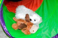 Adorable Paws / B-Wurf Malteser Welpe, 28.01.2015, 10 Wochen alt, Züchter Daniela Krüger