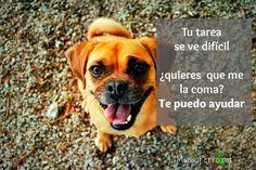 Los #perros siempre están dispuestos a ayudar :P #dogs #perros #puppy #puppies #frases #quotes #friends #amor #adopción