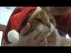 All I want for Christmas is YOU! Cute video featuring adoptable cats at the New Hampshire SPCA in Stratham, NH. With so many wonderful adult cats looking for  homes we are offering a limited time holiday adoption special!    Pick your cat, pick your price!  This is a perfect time to add a wonderful cat   to your family.   For more information on the cats seen in the video or other   animals available for adoption, please visit us at www.nhspca.org