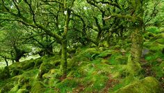 Wistmans Wood, Dartmoor is an ancient oak woodland. This print is sized, X printed on Fuji archival paper and printed with a matte finish. Fantasy Photography, Landscape Photography, Dartmoor Walks, Shenandoah Mountains, Devon And Cornwall, Hidden Places, European Vacation, Winter Trees, London Life