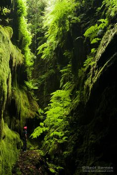 Covered with ferns and moss, Cubo de La Galga, Palma, Canarias, Spain