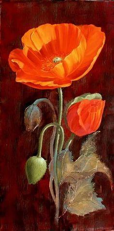 poppy flowers: