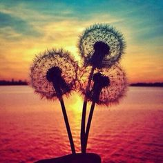 Image discovered by Find images and videos about beautiful, photography and summer on We Heart It - the app to get lost in what you love. Beautiful Ocean, Beautiful Images, Beautiful Flowers, Foto Nature, Tumblr Backgrounds, Dandelion Flower, Dandelion Seeds, Vintage Hipster, Jolie Photo