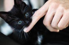 Cute kitten! (=・x・=)