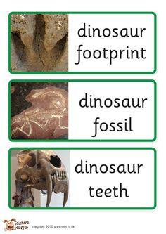 Teacher's Pet - Dinosaur labels - FREE Classroom Display Resource - EYFS, KS1, KS2, dinosaurs, label Preschool Writing, Preschool Science, Preschool Lessons, Science Biology, Science For Kids, Science Classroom Decorations, Classroom Displays, Classroom Themes, Classroom Activities