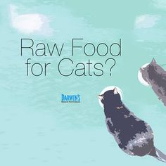 Do cats really like your raw food? I mean, really like your raw food. Not a sales pitch but the real deal about your raw food for cats. Darwin, Raw Food Recipes, Pet Products, Pets, Natural, Pet Supplies, Nature, Au Natural