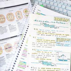 essay study notes