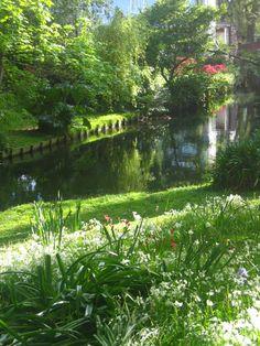 lovely garden in Christchurch, NZ