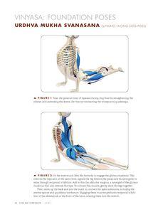 Anatomy for Vinyasa Flow and Standing Poses - Yoga Mat Companion 1