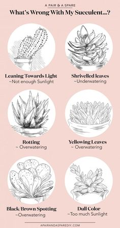 Whats Wrong With My Succulent Guide