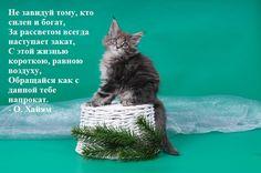 Цитаты со смыслом. Высказывания знаменитых на фото с кошками