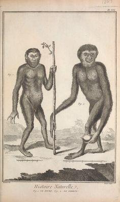 t.6 (1768) - Recueil de planches, sur les sciences, les arts libéraux, et les arts méchaniques : volume 6 natural history illustrations, GIBBONS