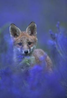 British wildlife by Danny Green / Discover Wildlife