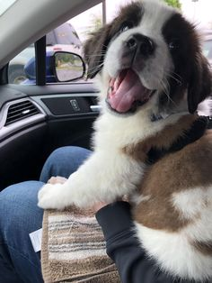 Newest member of the family Maisie the St Bernard weeks) Source by nmediano The post Newest member of the family Maisie the St Bernard weeks) & appeared first on Franklin Dogs. Cute Dogs And Puppies, Baby Puppies, Baby Dogs, Doggies, Teacup Puppies, Corgi Puppies, Cute Funny Animals, Cute Baby Animals, St Bernard Puppy