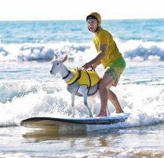 Αστείες εικόνες που είδα στην παραλία - Η ΔΙΑΔΡΟΜΗ ®