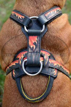 7 Best Leather dog harnesses for large dog breeds images | Big dogs