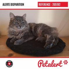 Cette Alerte (205192) est désormais close : elle n'est donc plus visible sur la plate-forme Petalert Suisse. Nous avons retrouvé notre animal Merci pour votre aide. Visible, Aide, Cats, Switzerland, Thanks, Shape, Animaux, Gatos, Cat